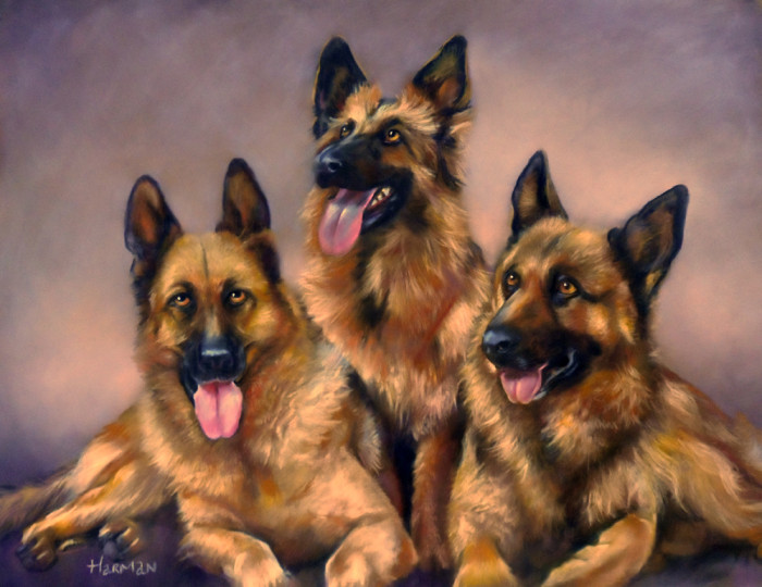german shepherds triple portrait, pastel,